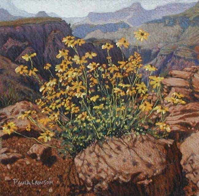 Grand Canyon Yellow Flowers