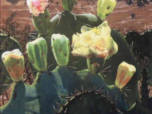 Prickly Pear Blooms in Big Bend