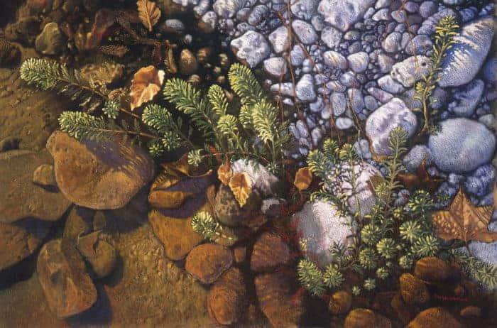 Guadalupe River's Edge